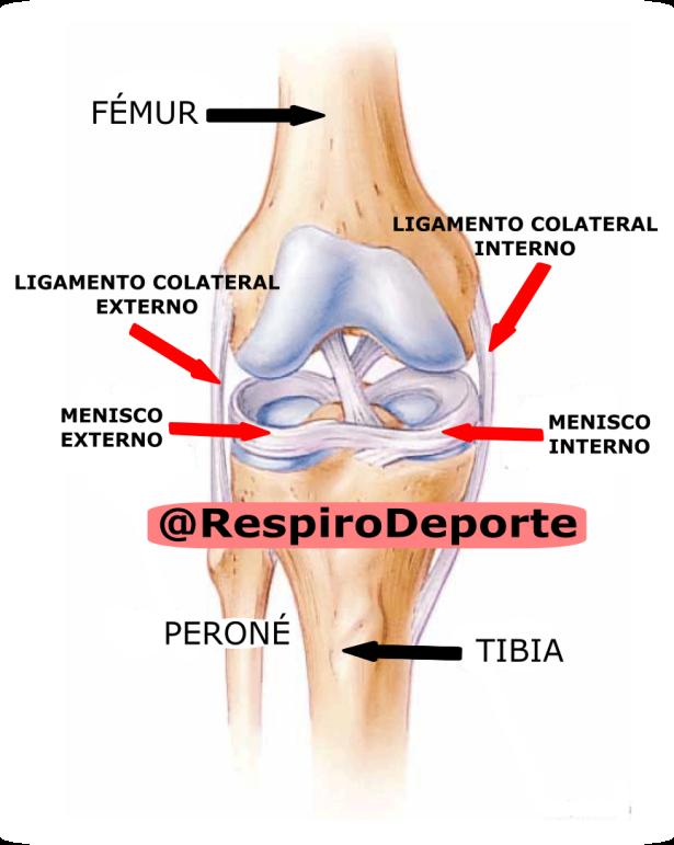 Varo de rodilla (Genu varo) – Respiro Deporte