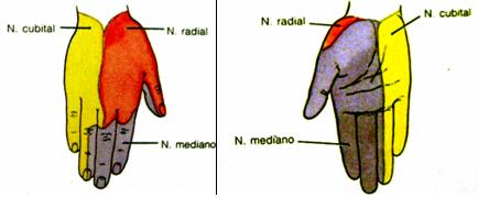 El hongo de las uñas en los pies del medio de la medicina china